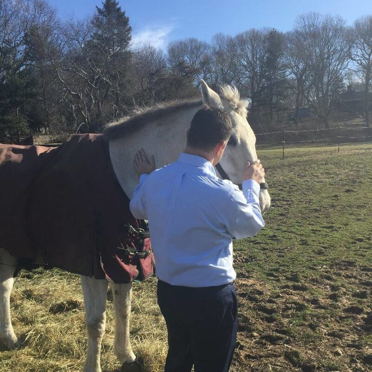 A Client's Perspective on Equine Therapy