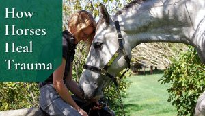 Equine Therapy: How can horses help heal trauma?