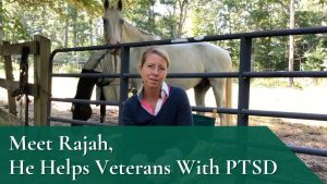 Meet Rajah, He Helps Veterans With PTSD