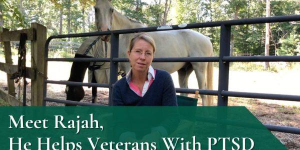 Meet Rajah, He Helps Veterans With PTSD