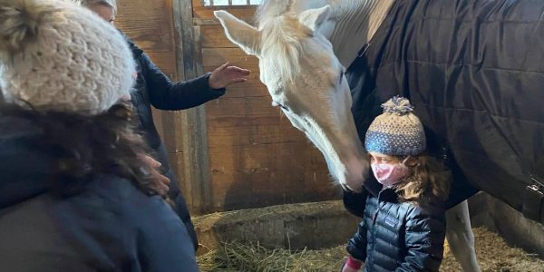 cora unicorns integrative equine therapy beachwood center for wellbeing