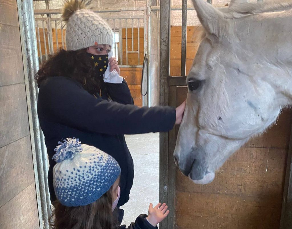 equine therapy the real life unicorn beachwood center for wellbeing in Rhode Islande