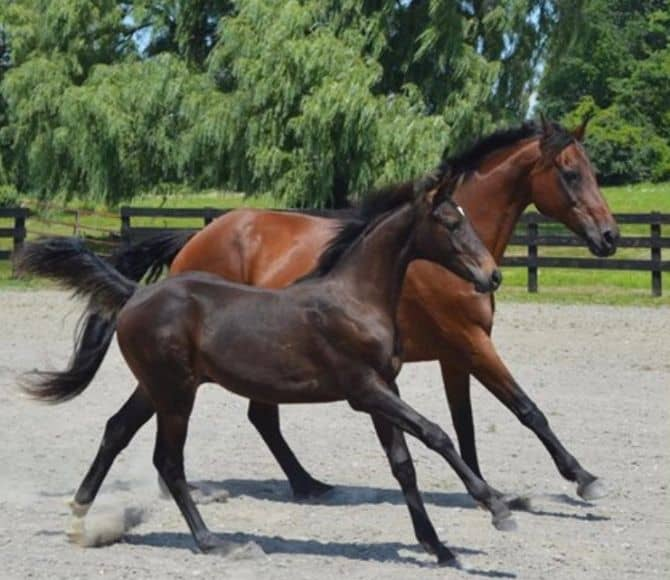 Lupita Integrative Equine Therapy Horse - Beachwood Center for Wellbeing - Rhode Island and Florida