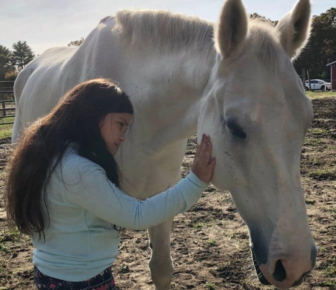 Rajah Integrative Equine Therapy Horse - Beachwood Center for Wellbeing - Rhode Island and Florida